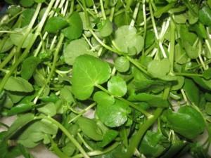 folha3 300x225 Benefícios das Folhas Verdes