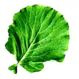 folha4 300x300 Benefícios das Folhas Verdes