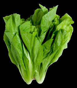 folha5 263x300 Benefícios das Folhas Verdes