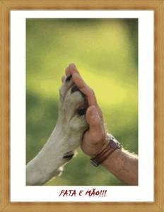 ong proteção animal 02 232x300 Como Montar uma ONG de Proteção Animal