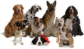 Nomes legais para colocar em cachorro1 Nomes legais para colocar em cachorro