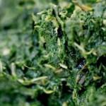 ansiedade4 150x150 Alimentos que Combatem a Ansiedade