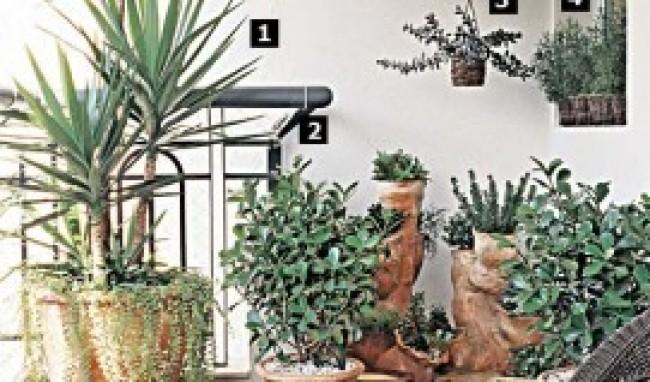 Veja algumas idéias super legais para montar um jardim em sua casa