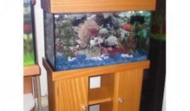 moveis de aquario 2 Móveis de Aquário Onde Comprar