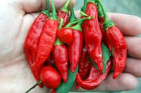 os benefícios da pimenta vermelha Os Benefícios da Pimenta Vermelha