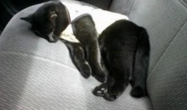 Acessórios para Gatos 4 Acessórios para Gatos, Onde Comprar