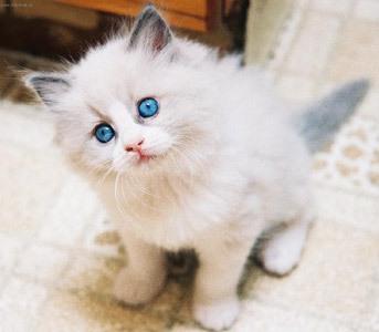 gato Melhores Animais de Estimação para Apartamento