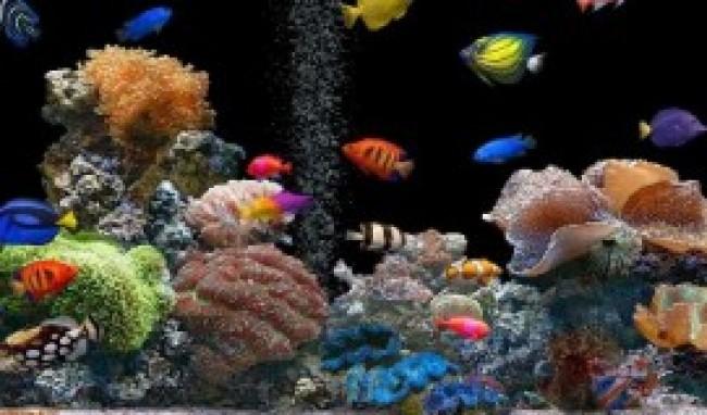 peixes Melhores Animais de Estimação para Apartamento