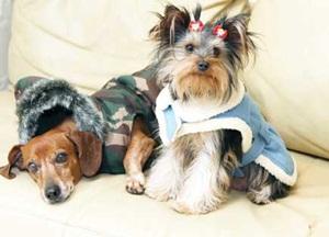 Roupas para Cachorros de Inverno 1 Roupas para Cachorros de Inverno