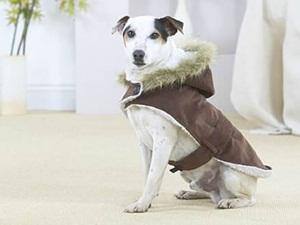 Roupas para Cachorros de Inverno3 Roupas para Cachorros de Inverno